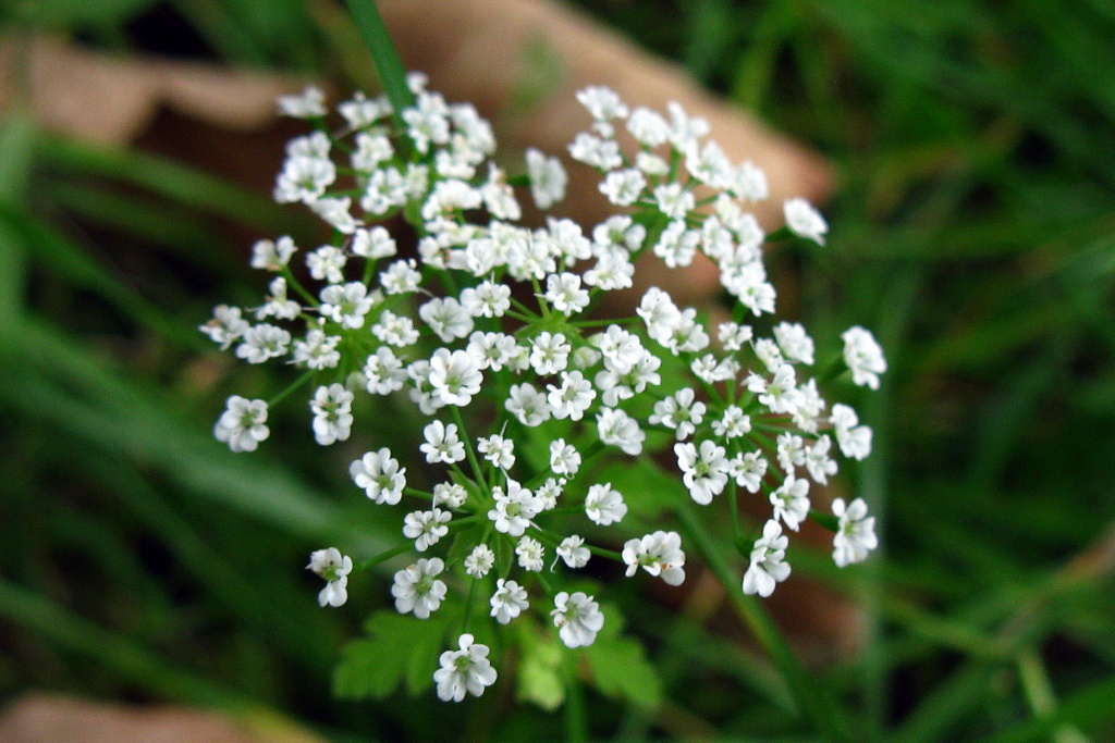 Pretty White Flower Sofica Flickr