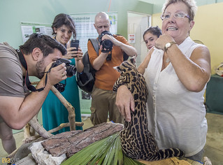 Ocelot Gamboa Wildlife Rescue pandemonio 2017 - 09 | by Eva Blue