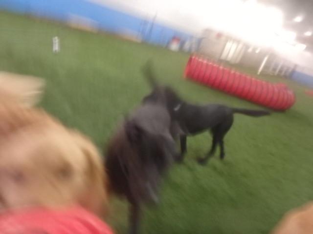 02/26/17 Frisbee Catch :D!!