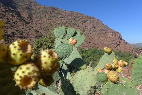 Cactus fruits | by Nicolas_F.