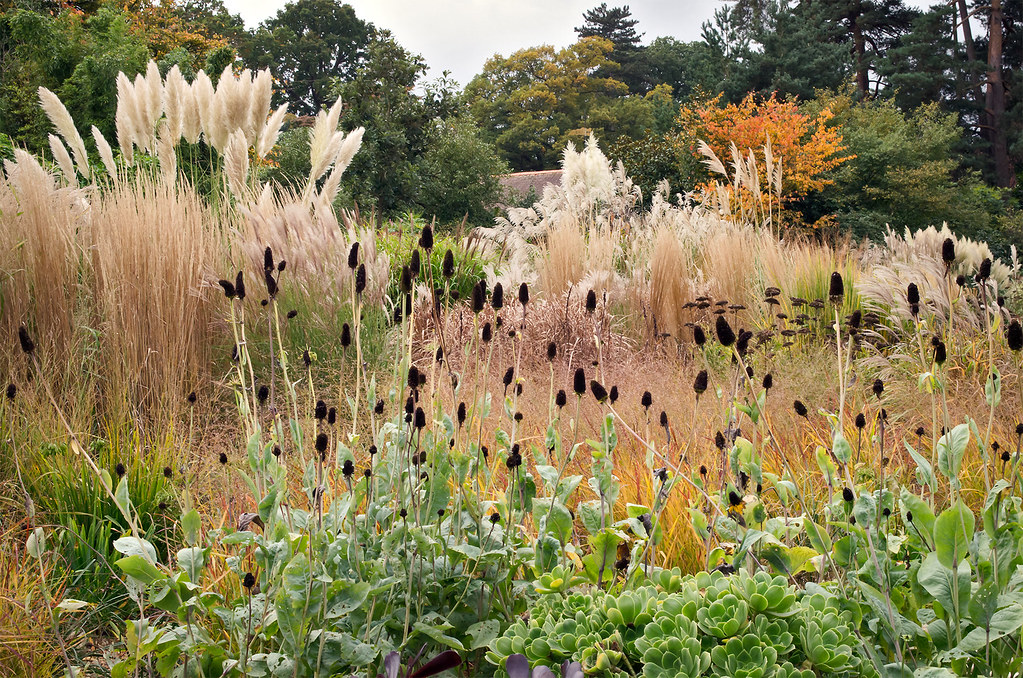 ... Dry Gardens In England (16 Of 21) | Grasses In A Border At RHS