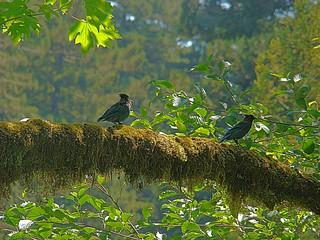 093 Vogels bij Big Tree