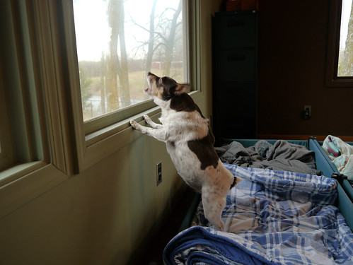 2013-11-16 - Rennie Barking at a Bird - 0004 | by smiteme