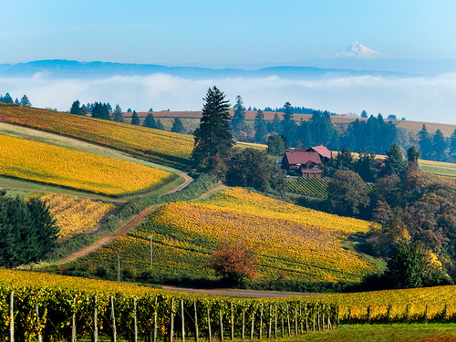 Oregon Wine Country | by Thomas Good