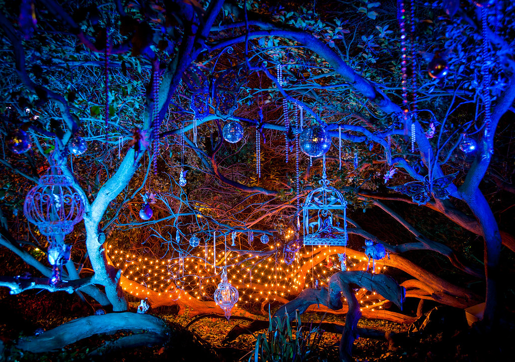 enchanted forest by nomadic vision photography enchanted forest by nomadic vision photography - Enchanted Forest Christmas Lights