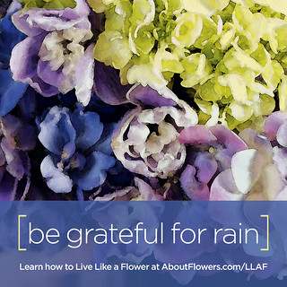 LIVE LIKE A FLOWER: Be Grateful for Rain | by Flower Factor