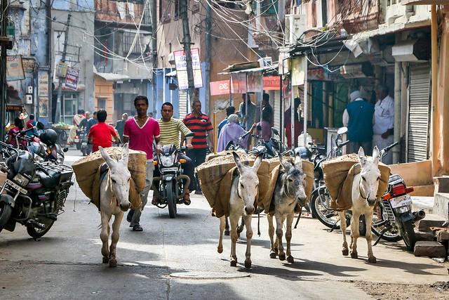 Donkeys walking in the street, Jodhpur, India ジョードプル 荷物を運ぶロバたち