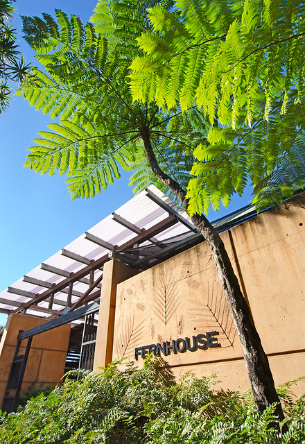 Fern House - Brisbane Botanic Gardens Mt Coot-tha