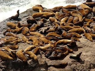057 Sea Lion Caves buiten