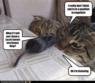 Cat Captions Funny Pictures