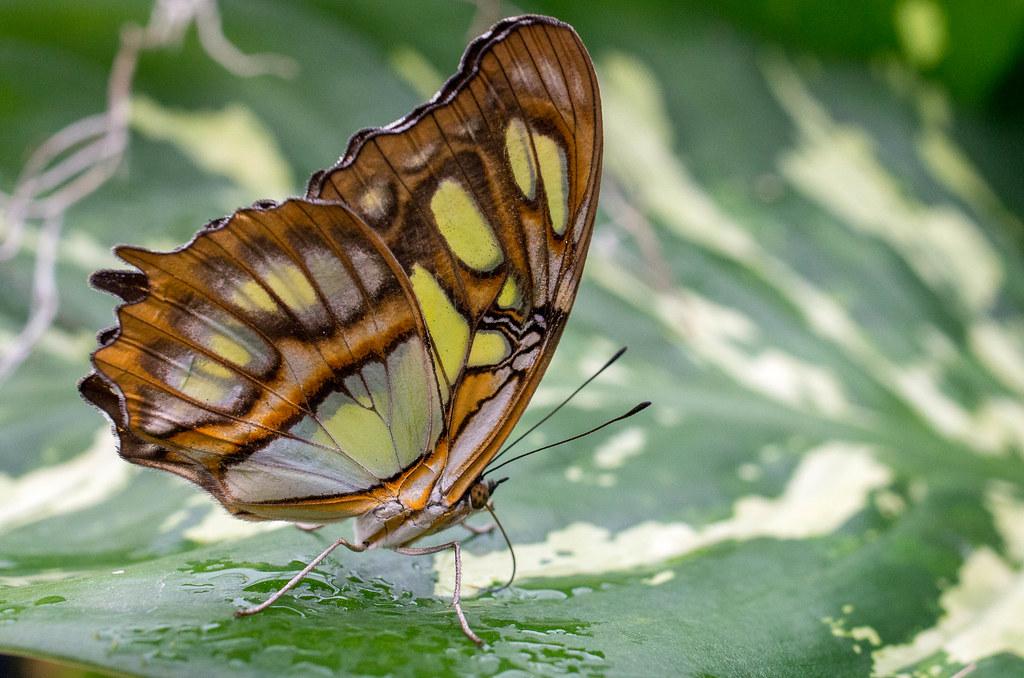 Papillon En Fete Jardin Hamel Pentax K5 Ii W Da35mm Macr Flickr