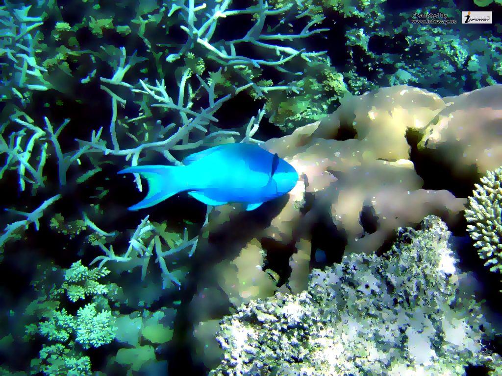 Great Barrier Reef Fish Wallpaper Great Barrier Reef Fish