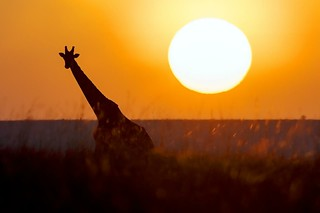 Masai Mara | by Christopher.Michel
