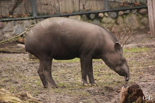 Besuch Zoo Berlin 26.02.201762