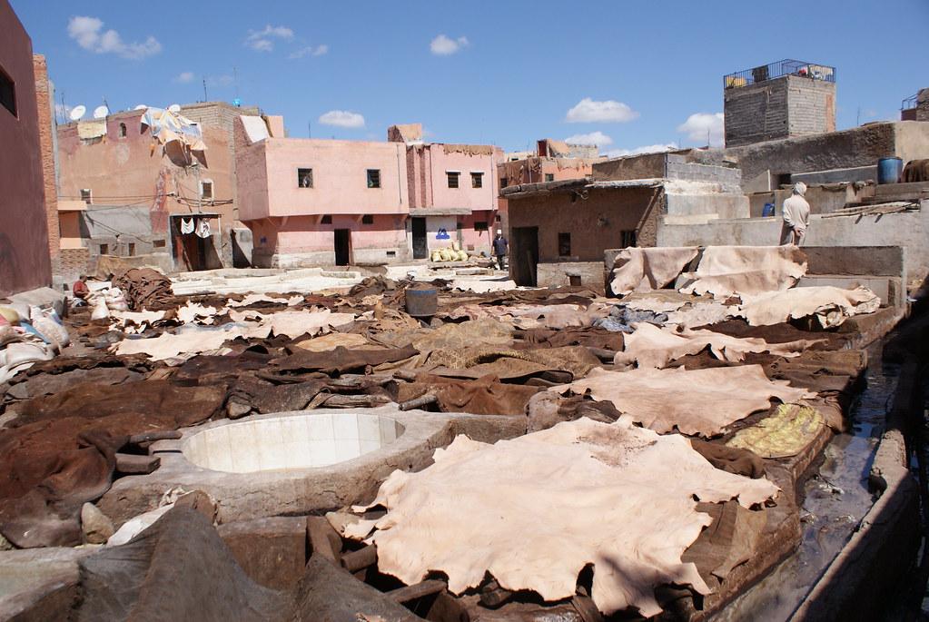 Les peaux sèches aux soleil entre plusieurs bains dans la tannerie de Marrakech.