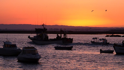 Atardecer con gaviotas y barcos pesqueros en Isla Cristina/Sunset with seagulls and fishing boats in Isla Cristina, Andalusia, Spain | by jmerelo