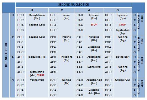 Mutations Worksheet Part 1 Gene Mutations Answer Key - Fill Online ...
