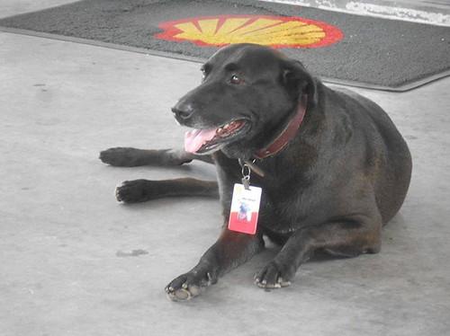 abandoned-dog-gas-station-employee-negao-brazil-3
