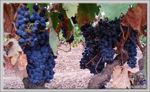 Uvas y Vino haciendo turismo del Vino 2
