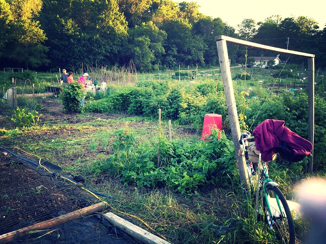 Weedy Eagle Heights plot (after) by wesesque, on Flickr