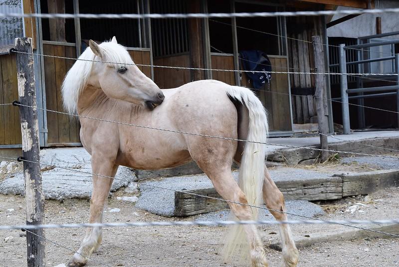 Horses 02.04 (2)