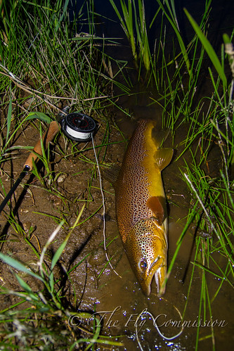 Wild River Brown | by Scott Loudon