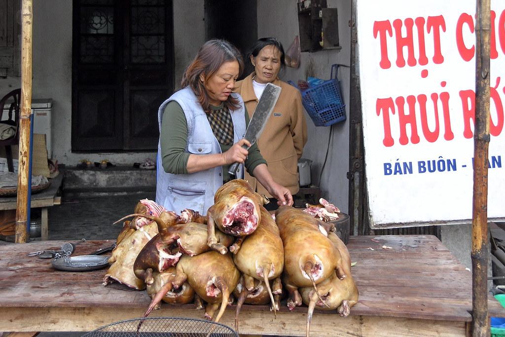 Vietnam - Hanoi - Dog Butcher - Speisehund - 18