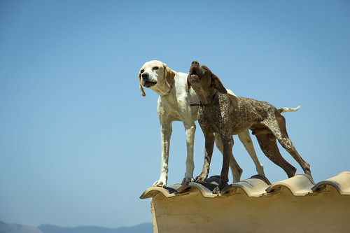 busot dogs | by ilbicho