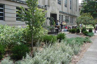 Mann Exterior Entrance Garden | by Cornell University Library Communications