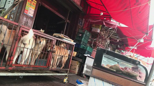 Live dogs next to dog meat at Moran Market, South Korea