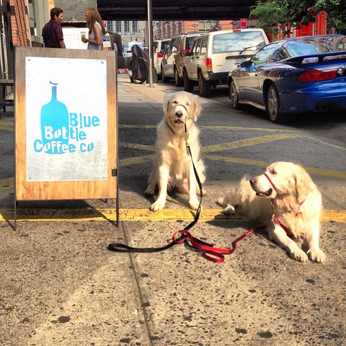 Occasional #bluebottle dogs | by epc