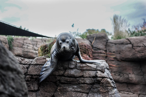 Indianapolis Zoo, Sea Lion | by bethannbud