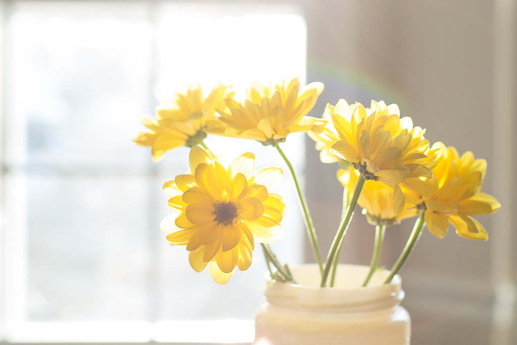 Cheery yellow flowers a little winter sun coming through t flickr cheery yellow flowers by pamela greer mightylinksfo