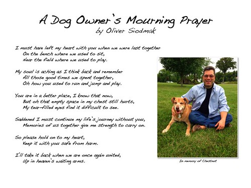 Mourning A Dog S Death