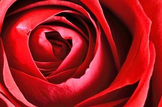 red photos on Flickr | Flickr