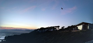 hawk × phone made this panorama thing after we left. awesome sunset/walk/time sunday w los ochans. | by meligrosa