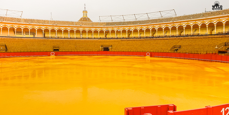 The Seville Bullring from the stands where people sit. The sand is a deep yellow that nearly matches the yellow trim that goes all the way around the stadium. The red trim really makes the yellow pop and on this day it had been raining so there was a great reflection that came off the water pooling in the arena