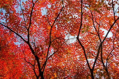 紅葉狩り - 東山公園 14