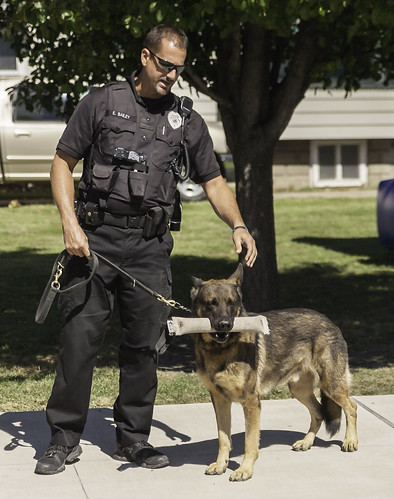 Police Dog Demonstration | by Michael Hart Photography