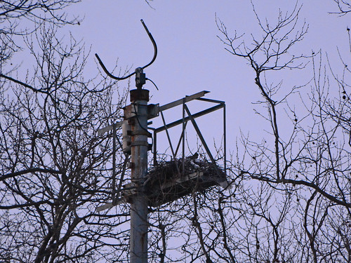 GT Hawk Nest - 1441