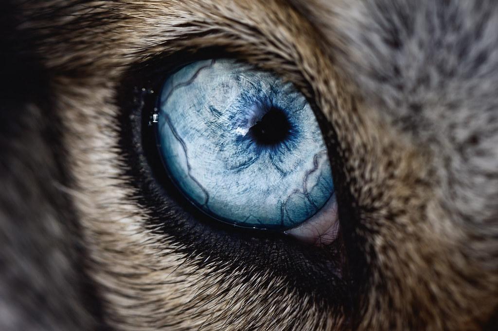 Stunning Macro Shot By Keith Johnston Keithj Flickr - 24 detailed close ups of animal eyes