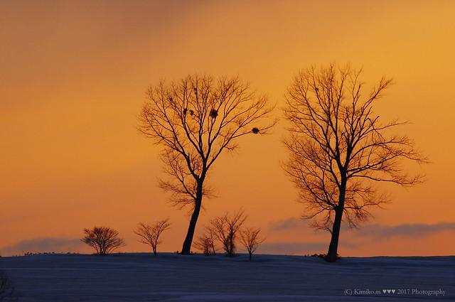 パフィの木の夕景