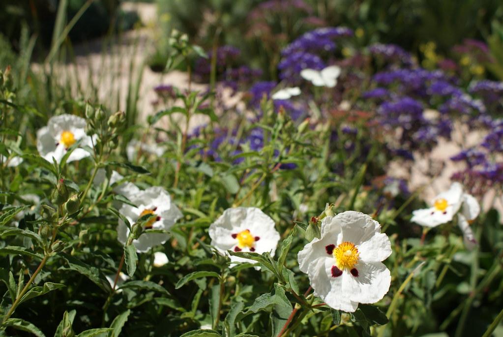 Fleurs et papillons dans le jardin secret de Marrakech