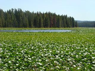 32 Swan Lake