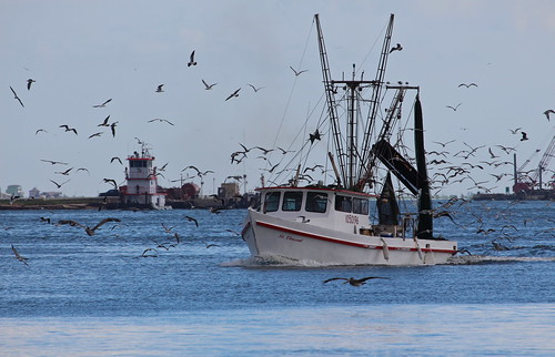 Fishing boat coming in from Galveston Bay | by roy.luck