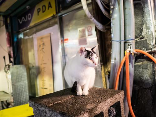 台湾の電脳街・光華市場の猫