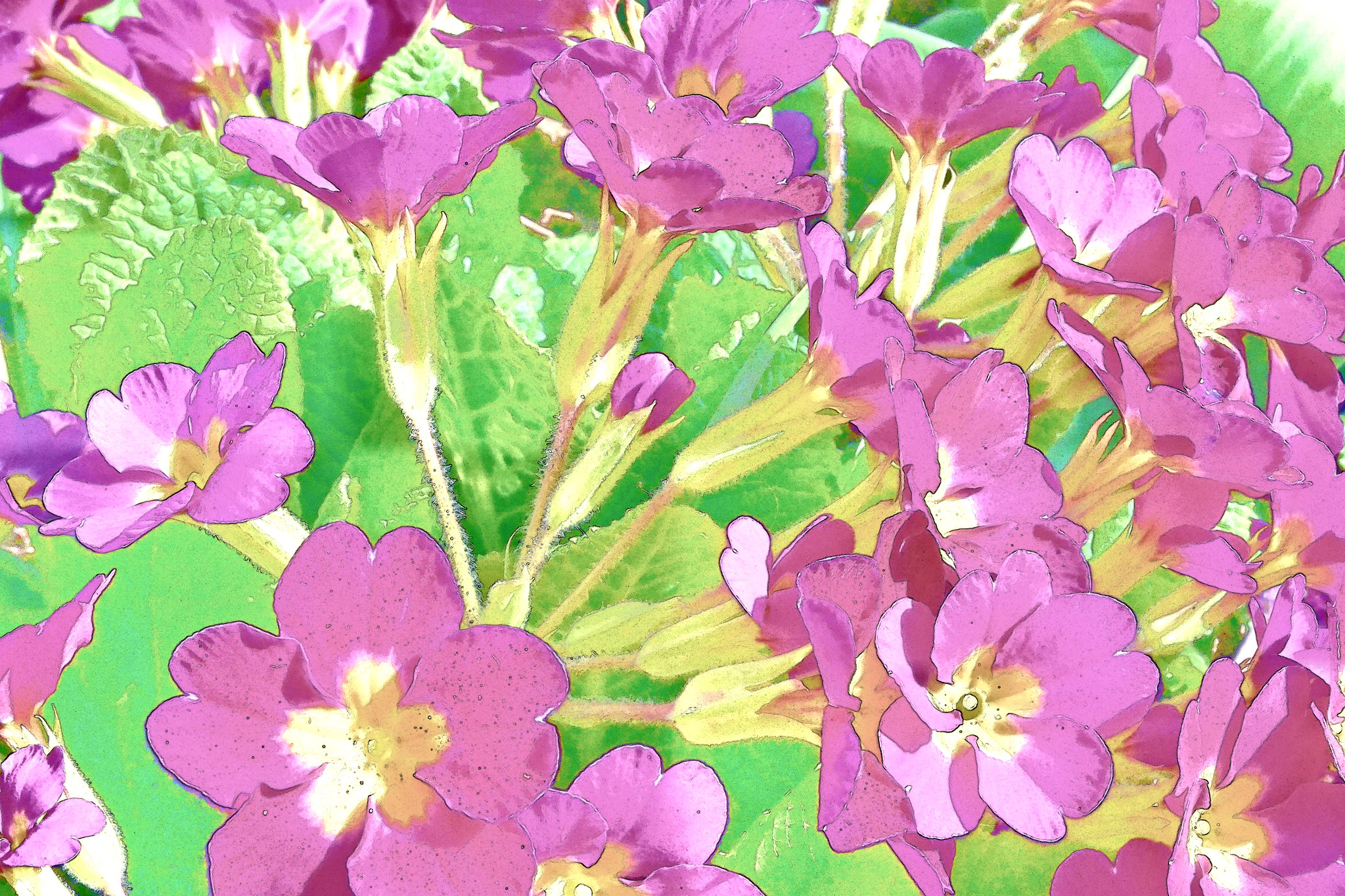 33849196861_abbd1e88fd_k Painting with primula
