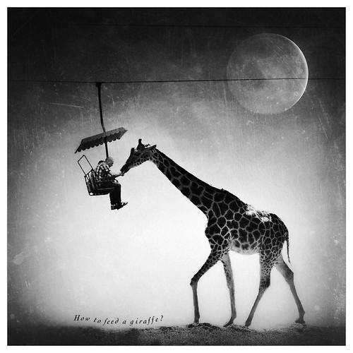 Giraffe Iphone  Plus Case