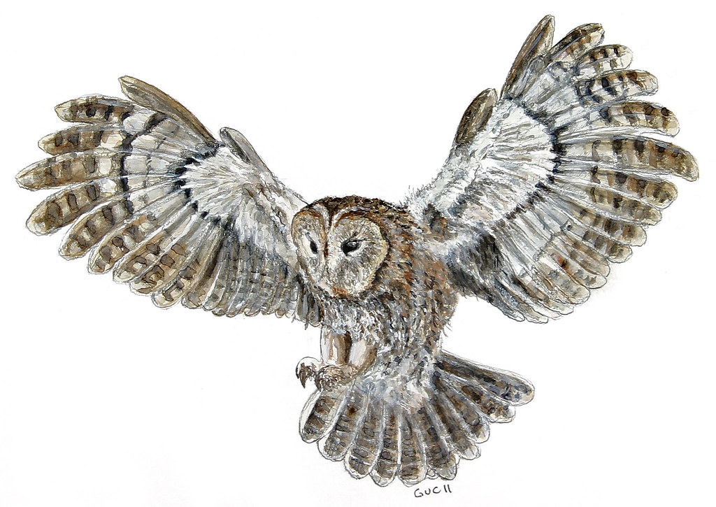jeanchristophegueguen tawny owl flying watercolor by jeanchristophegueguen