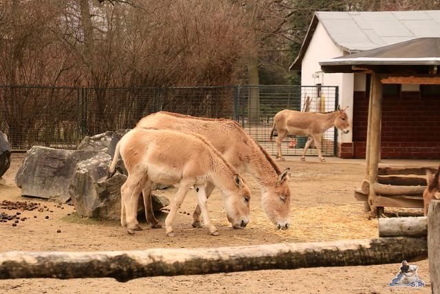 Tierpark Magdeburg 11.03.2017  099